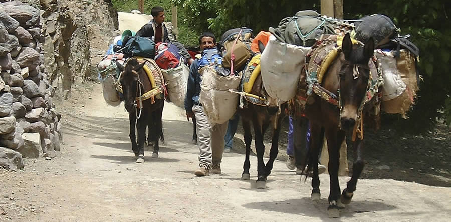 Mules of Morocco and trekking with a mule