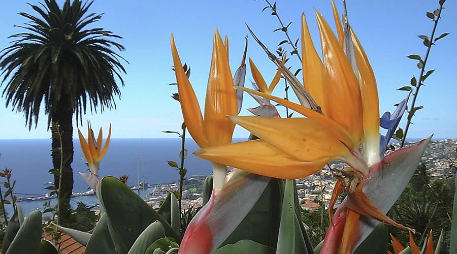 Funchal tropical Gardens